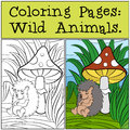 Coloring Pages: Wild Animals. Little Cute Hedgehog . Royalty Free Stock Photos - 71205998
