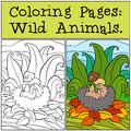 Coloring Pages: Wild Animals. Little Cute Hedgehog. Stock Images - 71206034