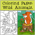 Coloring Pages: Wild Animals. Little Cute Squirrel. Royalty Free Stock Images - 71206149