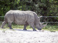 Rhinoceros Stock Photography - 71224982
