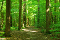 Forest Stock Photo - 7131070