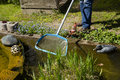 Gardener Cleans Pond With A Net, Swimming Pond With Flowering Sh Stock Photography - 71307672