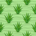 Succulents Seamless Pattern Stock Photo - 71395920