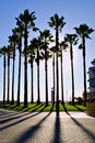 Palm Tree Shadows Royalty Free Stock Images - 7140269