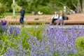 Flowers In A Recreation Park Royalty Free Stock Photos - 71481798