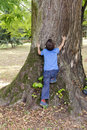 Child Hugging And Climbing Tree Stock Photography - 71498602