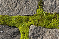 Moss Growing On Cobble Stones Royalty Free Stock Images - 7156509