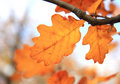 Autumn Leaves Stock Photography - 7158492