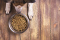 Dog And Bowl Of Dry Kibble Food Royalty Free Stock Photography - 71523617