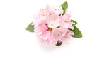 Flower Of Rhododendron Royalty Free Stock Photography - 71527957