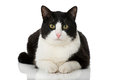 Black And White Cat Royalty Free Stock Photos - 71564928