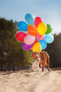 American Staffordshire Terrier Dog And Dog Jack Russell Terrier Jumps In The Air To Catch Flying Balloons Royalty Free Stock Images - 71672599