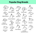 Dog Breeds Collection Stock Photography - 71684502
