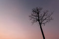 Dead Tree Stock Images - 71694184