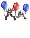 Kitten And Puppy American Voters Royalty Free Stock Photo - 71696525
