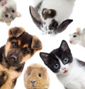 Set Of Pets Royalty Free Stock Photo - 71707695