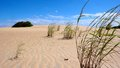 Sand Dune, Sky And Grasses Royalty Free Stock Photos - 71721898