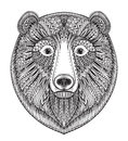 Hand Drawn Ornate Doodle Graphic Black And White Bear Face. Stock Photos - 71808693