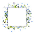 Forget-me-not Blue Forest Flowers - Nature Square Background Royalty Free Stock Photography - 71871317