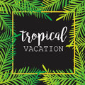 Summer Tropical Background Of Palm Leaves. Tropics, Tropical, Palm Trees, Tropical Palm Leaves. Royalty Free Stock Images - 71871929