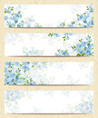 Web Banners With Blue Forget-me-not Flowers. Vector Eps-10. Royalty Free Stock Photos - 71921768