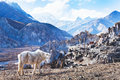 Landscape With Horse From Nepal, Tibet Stock Images - 71970134