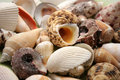 Shells Stock Photography - 720852