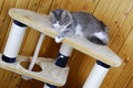 Cat Playing In A Huge Cat-house Royalty Free Stock Photos - 7217488