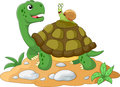 Funny Garden Snail Taking A Lift On A Turtle S Back Stock Image - 72172651