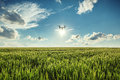 Flying Drone And Green Wheat Field Royalty Free Stock Photos - 72211178