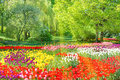 Tulips In The Park Stock Image - 72341641