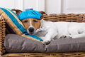 Sick Ill Dog With Fever Royalty Free Stock Image - 72345016
