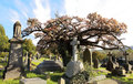 Old, English Cemetery With Flowering Tree. Stock Images - 72369354