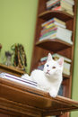 Cat Lying On The Writing Desk Royalty Free Stock Photo - 72401685