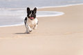 French Bulldog On The Beach Royalty Free Stock Images - 72420039