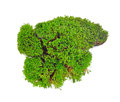 Green Moss Royalty Free Stock Photography - 72425047