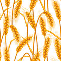 Seamless Pattern With Wheat. Agricultural Image Natural Golden Ears Of Barley Or Rye. Stock Image - 72439021