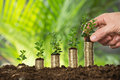 Person Hand Holding Small Plant On Stacked Coins Royalty Free Stock Photo - 72447055