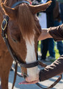 Hand Feeding Peppermints Stock Photography - 72458372