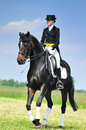 Dressage Rider On Bay Horse Galloping In Field Royalty Free Stock Image - 72490256
