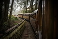 Old Train On Railway Forest Stock Photography - 72497542