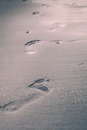 Footprints In The Sand Royalty Free Stock Photography - 72600597