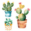 Watercolor Handpainted Cactus Plant And Succulent Plant In Pot. Royalty Free Stock Image - 72803126