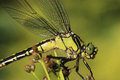 Detail Dragonfly Sitting On Plant Stock Photos - 72804203