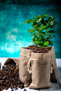 Ground Coffee With Coffe Plants Royalty Free Stock Photo - 72849705
