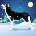 Huskies In The Winter Woods Royalty Free Stock Photography - 27784597