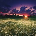 Summer Meadow On The Dusk Royalty Free Stock Photography - 72927367