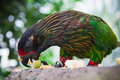 Green Parrot Royalty Free Stock Photo - 72965375