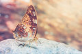 Butterfly In Nature With Vintage Filter Royalty Free Stock Photo - 72976725