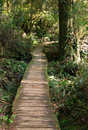 Path Through The Rain Forest Royalty Free Stock Photography - 733437
